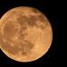 Got the Moon Tonight! by rickster549