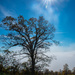 sun tree-0421