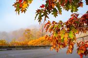 31st Oct 2020 - leaves-9994