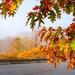 leaves-9994