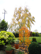 1st Nov 2020 - From the kitchen window