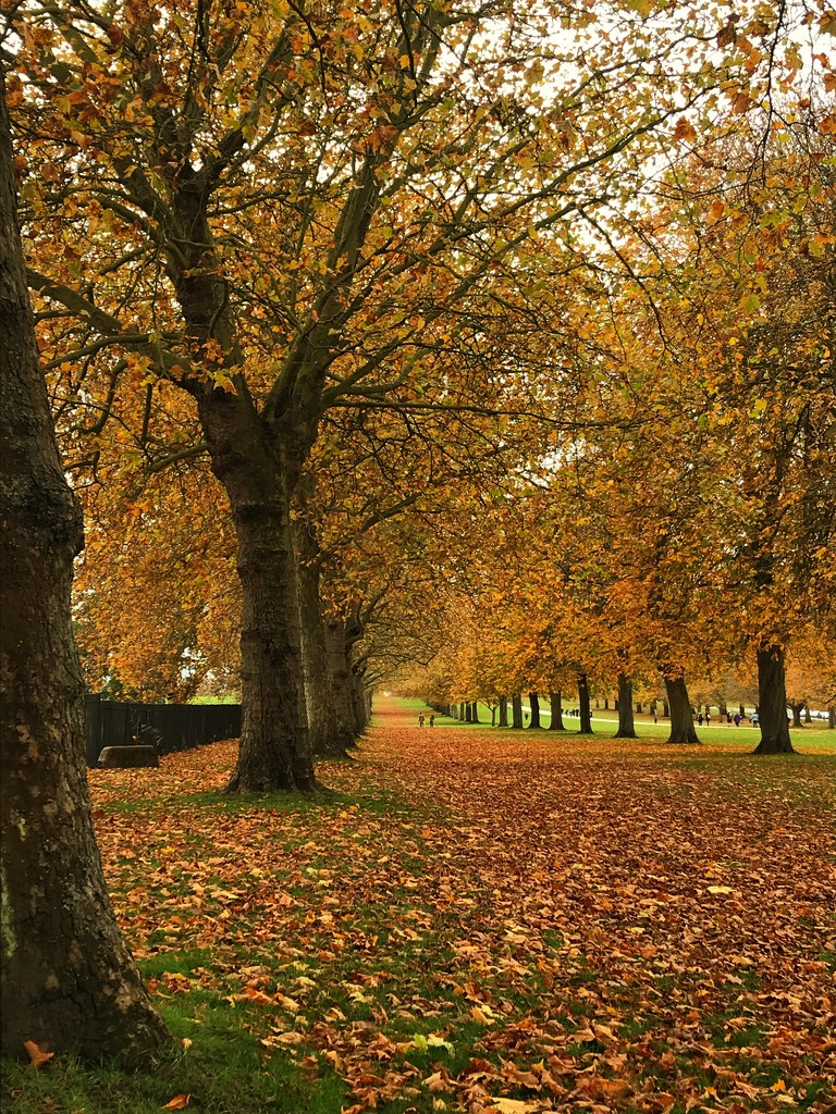 Autumn  by goosemanning