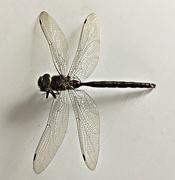 2nd Nov 2020 - Crackle Glass Wings