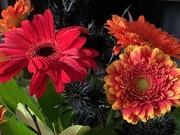 1st Nov 2020 - Halloween flowers