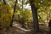 2nd Nov 2020 - Walking In The Bosque In The Fall.