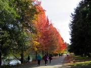 2nd Nov 2020 - Fall Colors at Green Lake