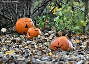 2nd Nov 2020 - Pumpkins in the wood