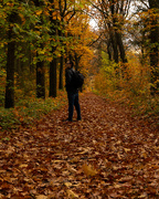 2nd Nov 2020 - Enjoying the Autumnal Forest