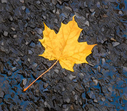 22nd Oct 2020 -  Leaf on the Road