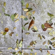 2nd Nov 2020 - Tableau for the FALLen