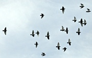2nd Nov 2020 - Fly over.......