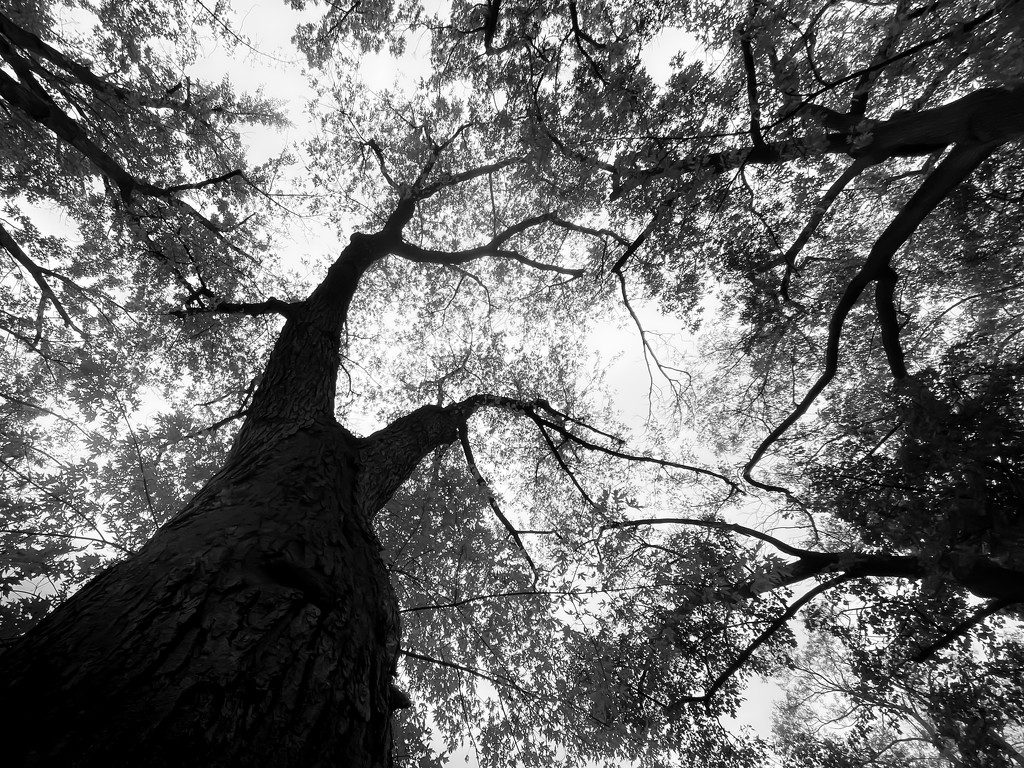 tree by northy