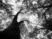 2nd Nov 2020 - tree