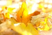 2nd Nov 2020 - Autumn yellow