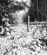 3rd Nov 2020 - First Snow!