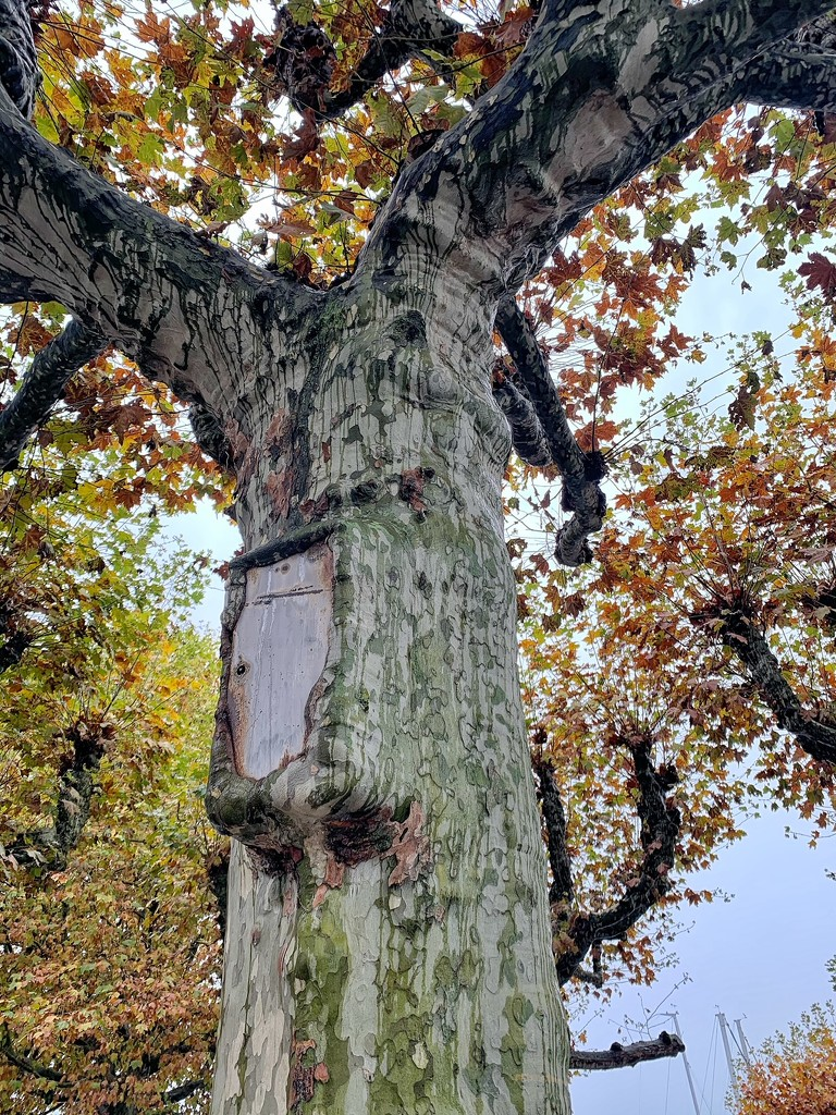 Tree eating a box.  by cocobella