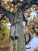 3rd Nov 2020 - Tree eating a box.