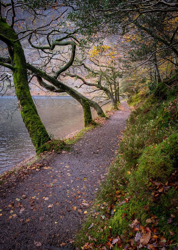 The Lake Path by ellida