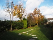 3rd Nov 2020 - The branches are nearly bare!
