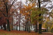 3rd Nov 2020 - Rainy day in the park