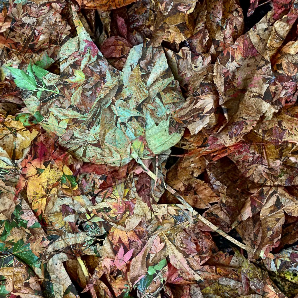 FALLen carpet by stimuloog