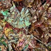 3rd Nov 2020 - FALLen carpet