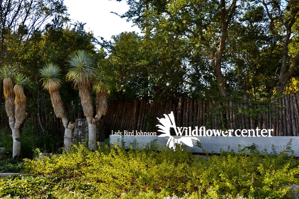 The white wildflower center sign by louannwarren