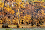 3rd Nov 2020 - Caddo Lake