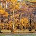 Caddo Lake by lynne5477