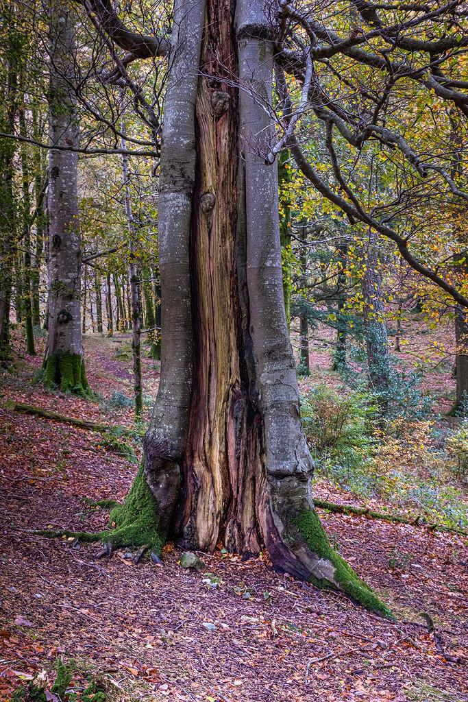 A Mystery Tree  by ellida