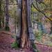 A Mystery Tree