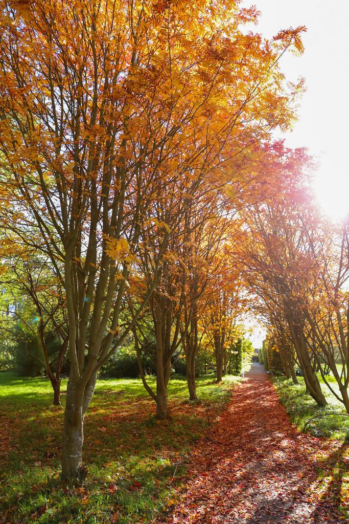 Autumn Avenue by phil_sandford