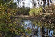 3rd Nov 2020 - Small Marsh