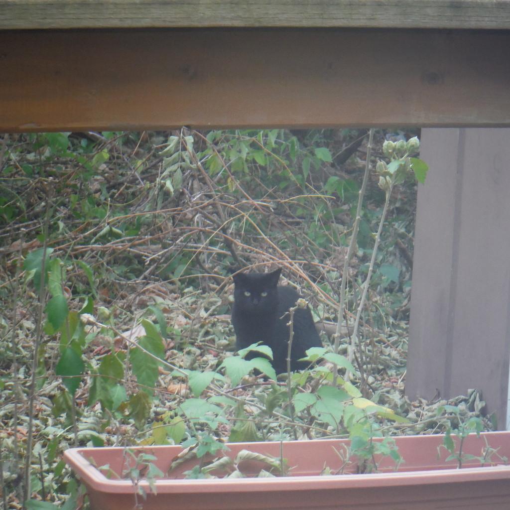 Back Yard Visitor by spanishliz