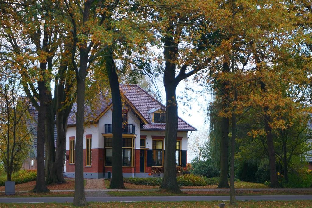 autumn colours by gijsje