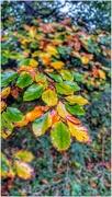 4th Nov 2020 - Those autumn colours!