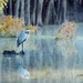 Heron at Caddo Lake by lynne5477
