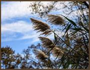 3rd Nov 2020 - Ornamental Grass