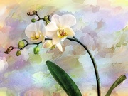 4th Nov 2020 - Orchid with watercolours