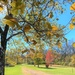 Take Time To Watch The Leaves Turn by lynnz