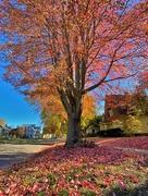 2nd Nov 2020 - Leaves