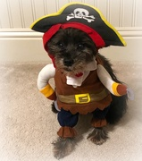 1st Nov 2020 - Yes I Am a Pirate