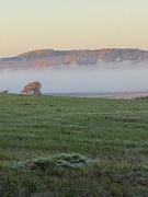 4th Nov 2020 - Morning Mist