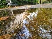 3rd Nov 2020 - Autumn puddle