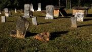 4th Nov 2020 - LHG-4133- Babbs Cemetery