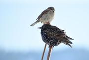 25th Oct 2020 - Wild Bird Totem