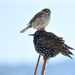 Wild Bird Totem