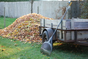 4th Nov 2020 - time for raking has ended