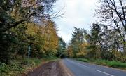 4th Nov 2020 - Country road ...........