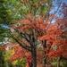 Falling leaves by samae